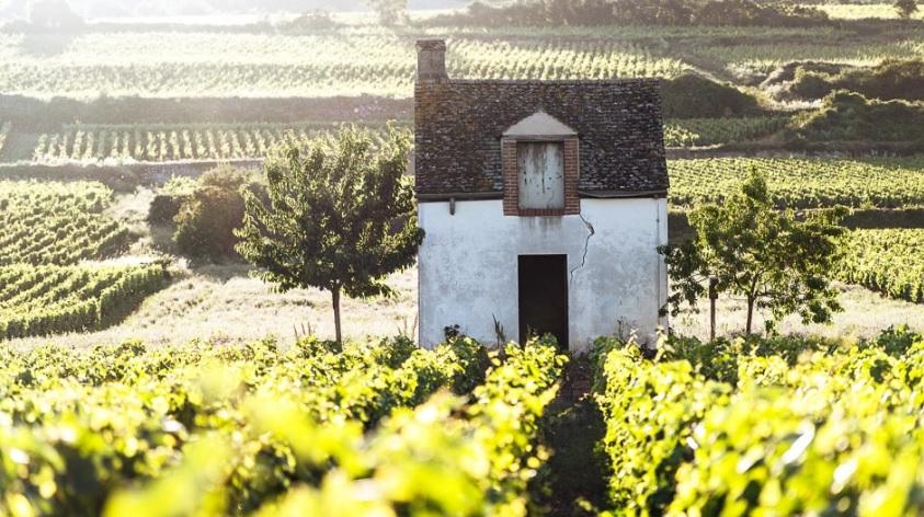 Как найти идеальный виноградник во Франции и извлечь из него максимальную выгоду